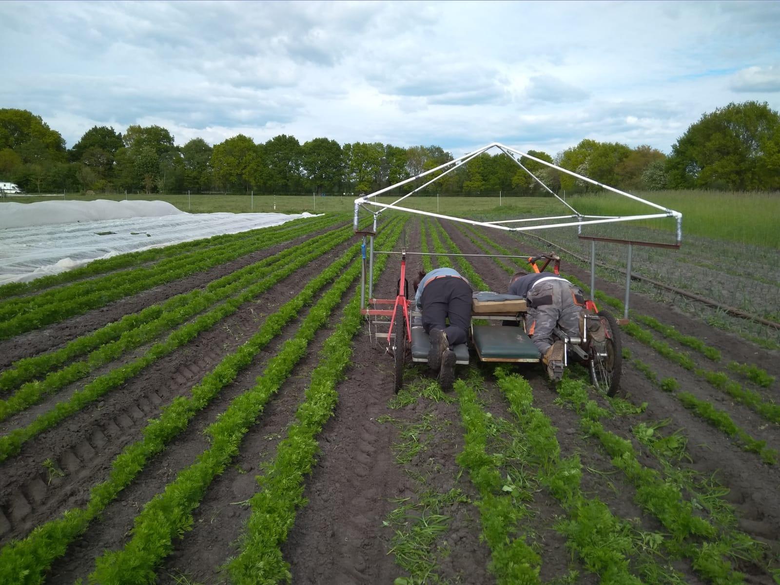 Solidarische Landwirtschaft Oldenburg